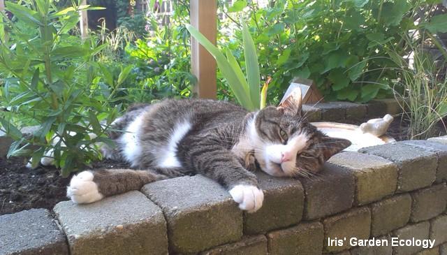 Katten Afschrikken Tuin : Katten in de tuin iris garden ecology