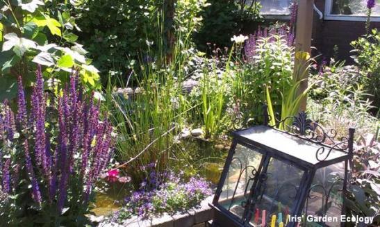 vijvertje in mijn tuin