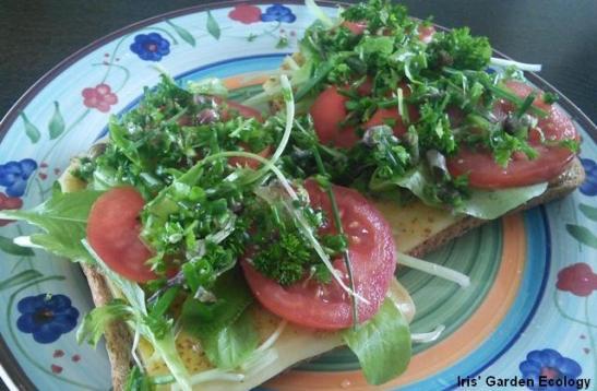 broodje pittig gezond1