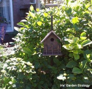 vogelhuisje in struiken