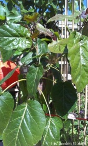 Mijn plant begin 2014