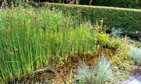 Leuk idee voor wateropvang in De tuinen van Appeltern.
