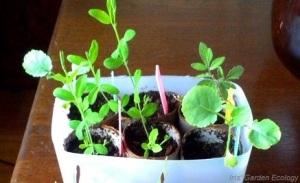 planten kweken2