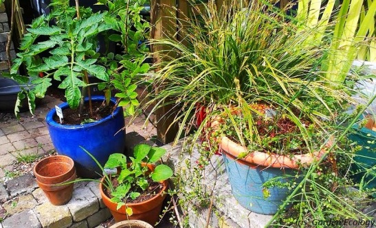 planten in pot