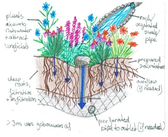 Tekening van een rain garden (regentuin) uit mijn handboek