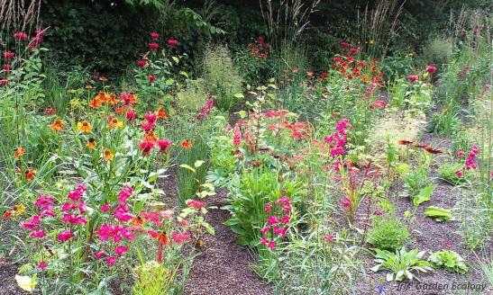 droge tuin beplanting