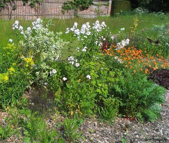 Beplanting bij Landgoed Beeckestijn een aantal jaar geleden.