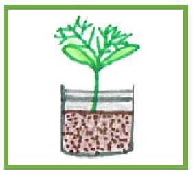 6 plant