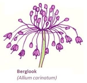 Berglook