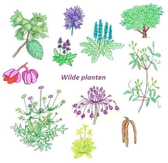 Wilde planten1