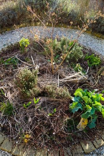 hazelaar takken mulch voorjaar