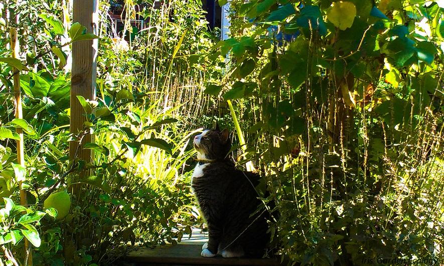 Wat te doen tegen kattenpoep iris 39 garden ecology for Kattenpoep in de tuin