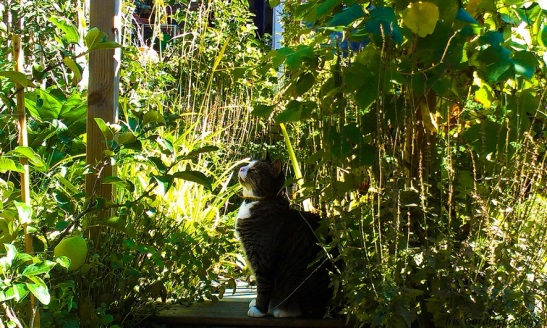 Kat groene tuin zonder kattenpoep