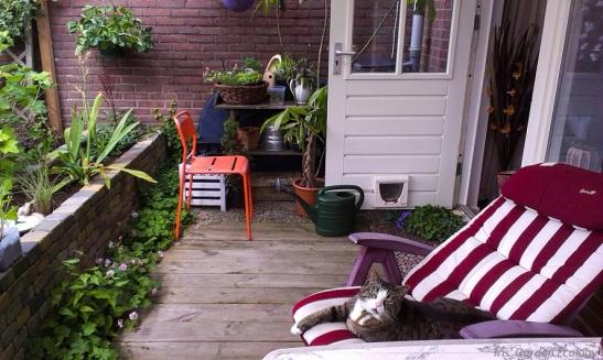 Mijn kat luiert in de het jaar ervoor aangelegde tuin. Alleen de aarde in de verhoogde border moest ik nog bedekken.