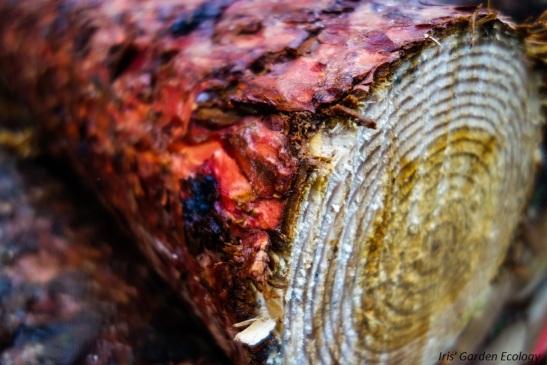 prachtig gekleurd hout grove den