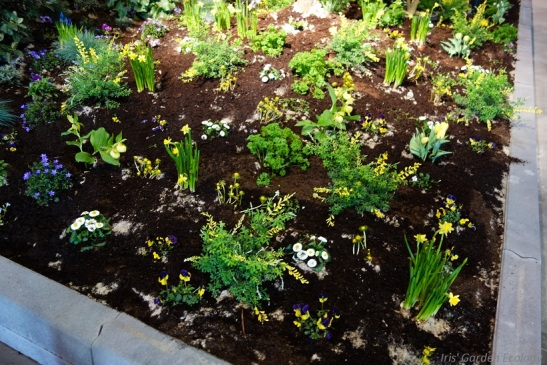 kale aarde tuin