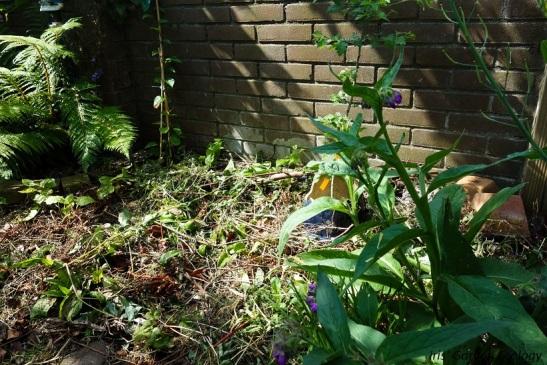 border 2 smeerwortel meidoorn crosne schisandra