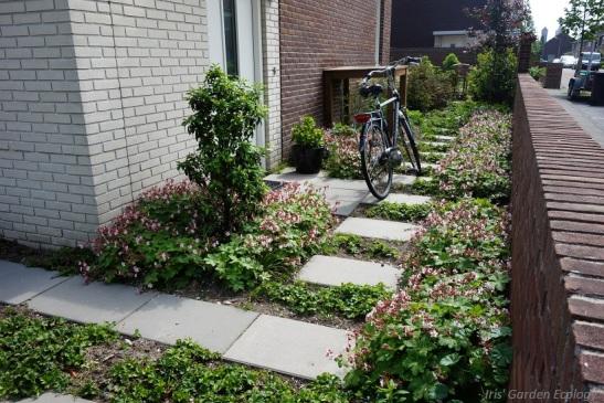 Leuk tuintje in Beverwijk, vorig jaar aangelegd.