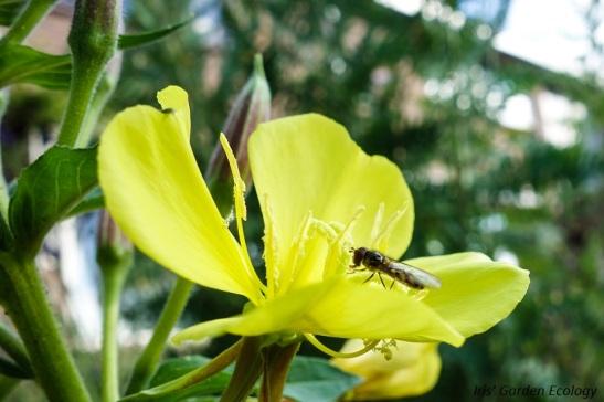 biodiversiteit
