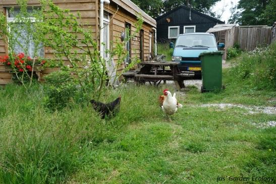 landgoedcamping buiten kippen