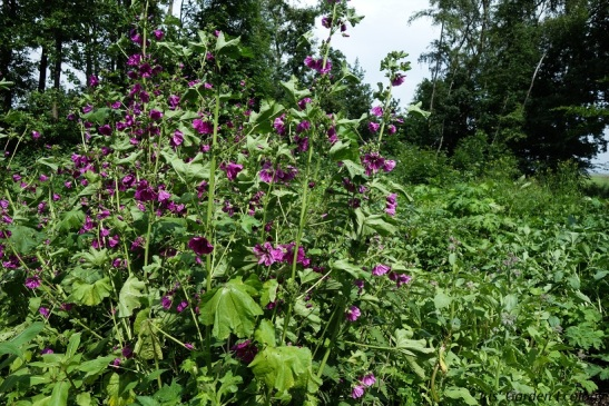 rubens garden border