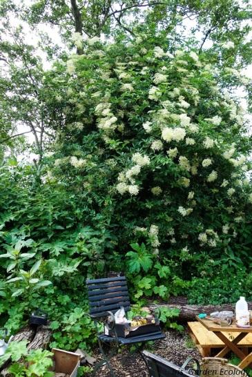 rubens garden vlier