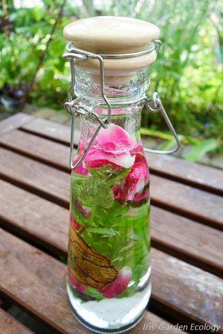 Kruidenwater rozen 1