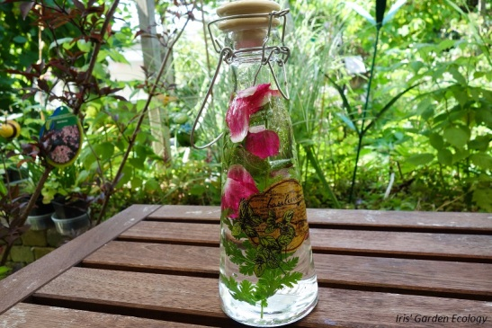 Kruidenwater rozen