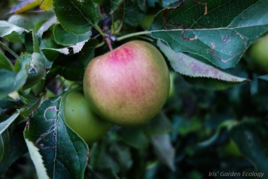 loopt je kind ineens met een appel voorbij