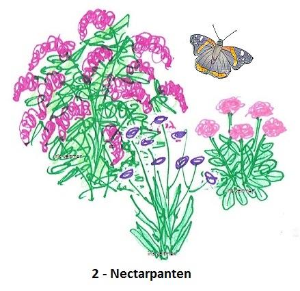 Nectarplanten voor de algemene soorten en zuiplappen onder de vlinders.