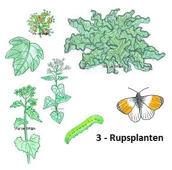 Waardplanten, planten voor rupsen.