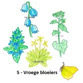 Vroege bloeiers voor vlinders (en andere insecten).