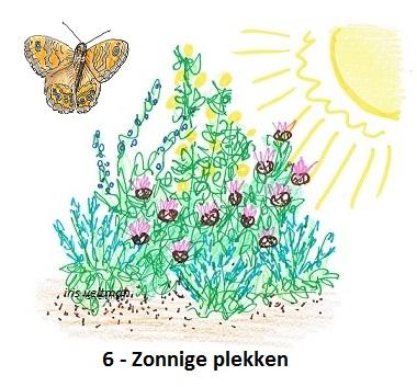 6-zonnige-plekken-vlinders