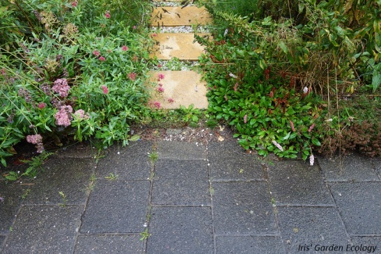 Voor het pad mijn voortuin in: geen plasvorming of stroompjes water naar de straat.
