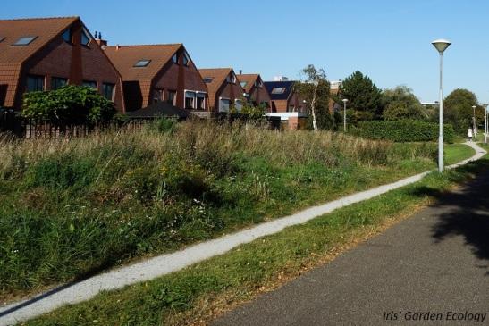 Het deels wilde stuk in de buurt Waterakkers-Lunetten in Heemskerk - een mooi voorbeeld van bevordering van biodiversiteit in de bebouwde kom
