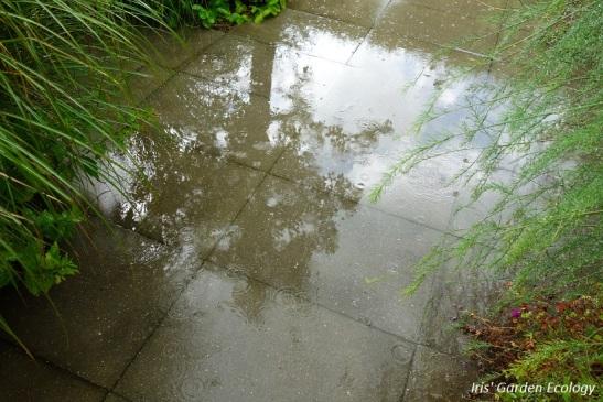 Regenwater kan niet weg: plasvorming