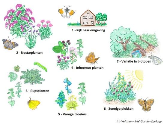 Meer vlinders in de tuin? Dan zijn dit 7 stappen om aan te denken.
