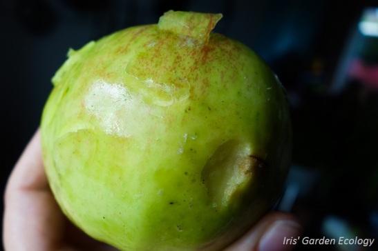 appel-met-hapjes-eruit