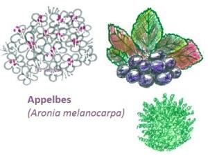 appelbes mulchen bladverliezend groenbemester eetbaar bessen
