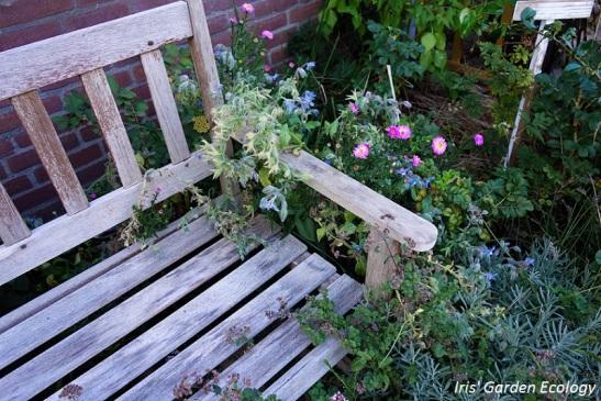mulchen-mijn-favoriete-planten-voor-mulch