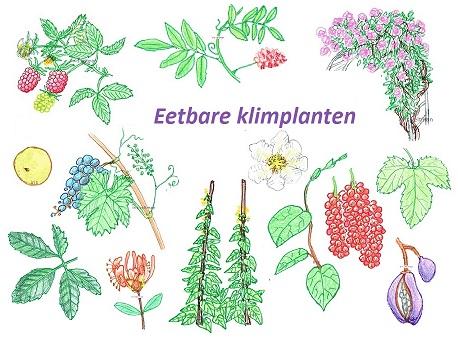 eetbare-klimplanten