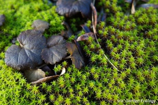 Kleine planten tussen het mos