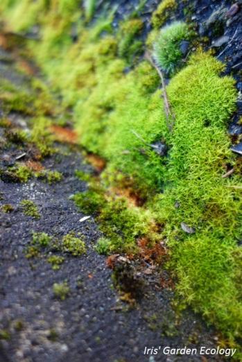 Een steegje langs het groen... Stiekem heb ik deze op zijn zij gekanteld omdat het zo nog meer op een paadje lijkt.
