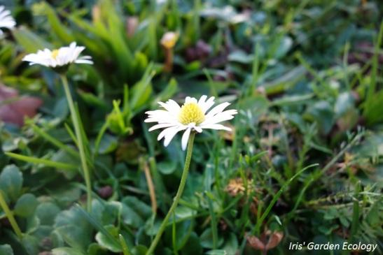 Een mini-bloementuintje. Wat een hoop verschillende plantjes eigenlijk!