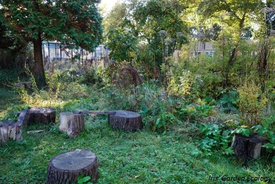 De zitkring in het voedselbos van PermacultuurCentrum Haarlem in november.