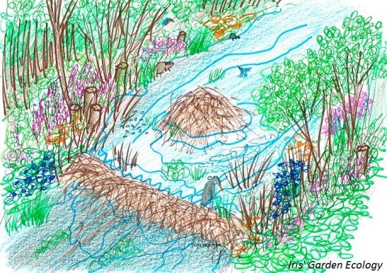 bevers-ecosystem-engineers-effect-op-omgeving1