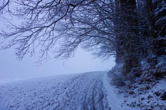 bomen-in-sneeuw-oneindigheid