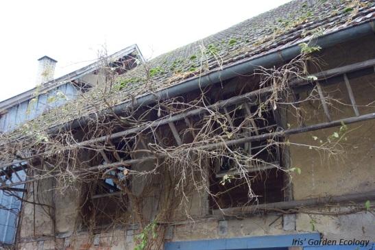 ladder-als-plantenklimrek