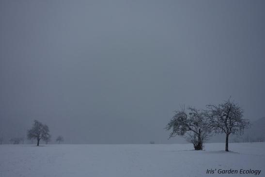 verstild-oneindig-landschap