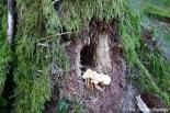 huisje-boompje-paddenstoel